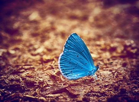 41731974 - blue butterfly vintage photo