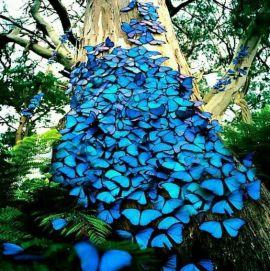 Butterflies Blue Maze
