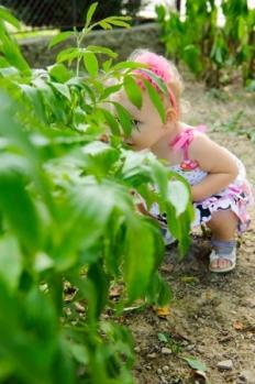 15214082 - little girl is hiding over the green bush