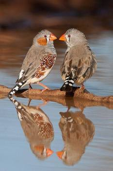Birds Reflection