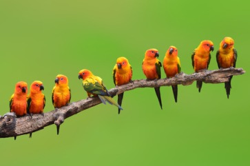 birds Belong
