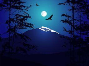Woods Nighttime