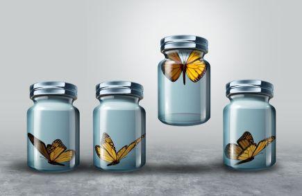 ButterflyjarBrave
