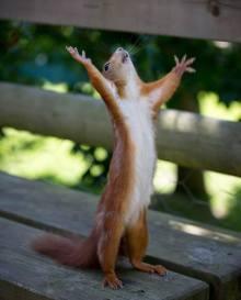 Squirrel Praise
