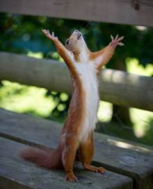 Squirrel Praise