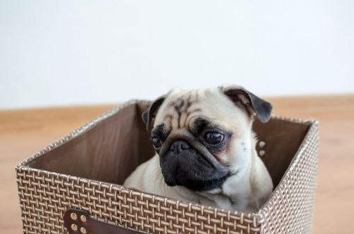 Box and Puppy.jpg