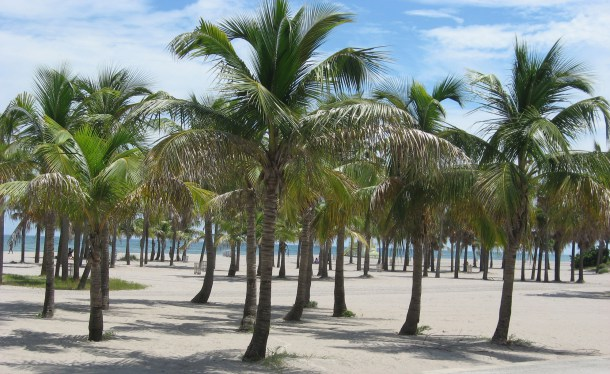 coconut palms on crandon beach