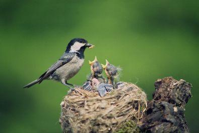 11879446 - birds
