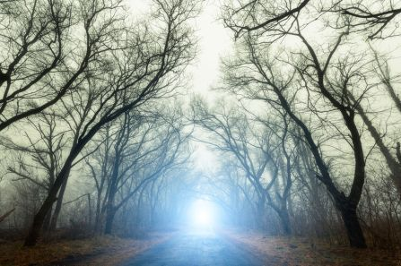 Scary mysterious forest with road in fog in autumn