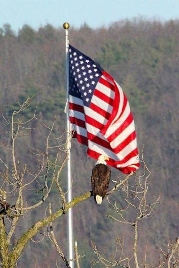 American Flag and Eagle.jpg