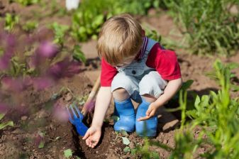 21287064 - boy is putting seeds in the soil in the vegetable garden