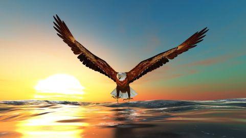 9708844 - bald eagle